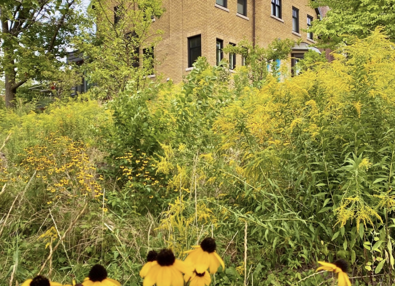 Building Biophilic Cities:  Scaling Up Green Infrastructure  Copy